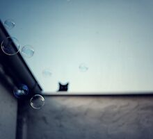 Bubble cat... by Louise LeGresley