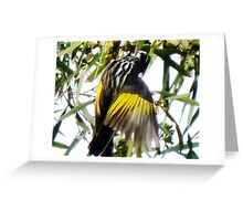Newholland Honeyeater- in my garden Greeting Card
