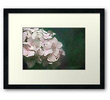 Textured Pink Hydrangea Framed Print