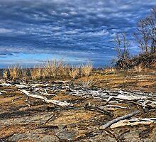 Winter Driftwood by Carolyn  Fletcher