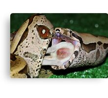 My what a big mouth you got Canvas Print