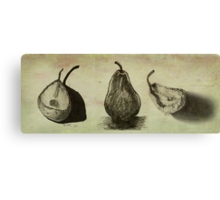 Pears ~ A Sketch Study Canvas Print