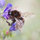 Bumbling Bee by Robyn Carter