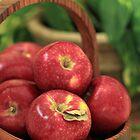 Basket of Beauties by Lynn Gedeon