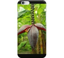 A Banana Flower Spike Inflorescence iPhone Case/Skin