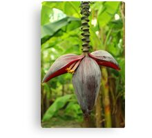 A Banana Flower Spike Inflorescence Canvas Print
