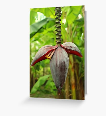 A Banana Flower Spike Inflorescence Greeting Card
