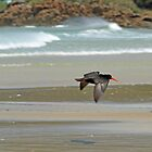oyster catcher by joergilmaz
