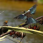 feedind tui two by joergilmaz