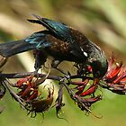 hungry tui by joergilmaz