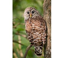 Barred Owl on a Saturday morning in August Photographic Print