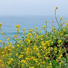 Pacific Coast Flora by Kathy Nairn