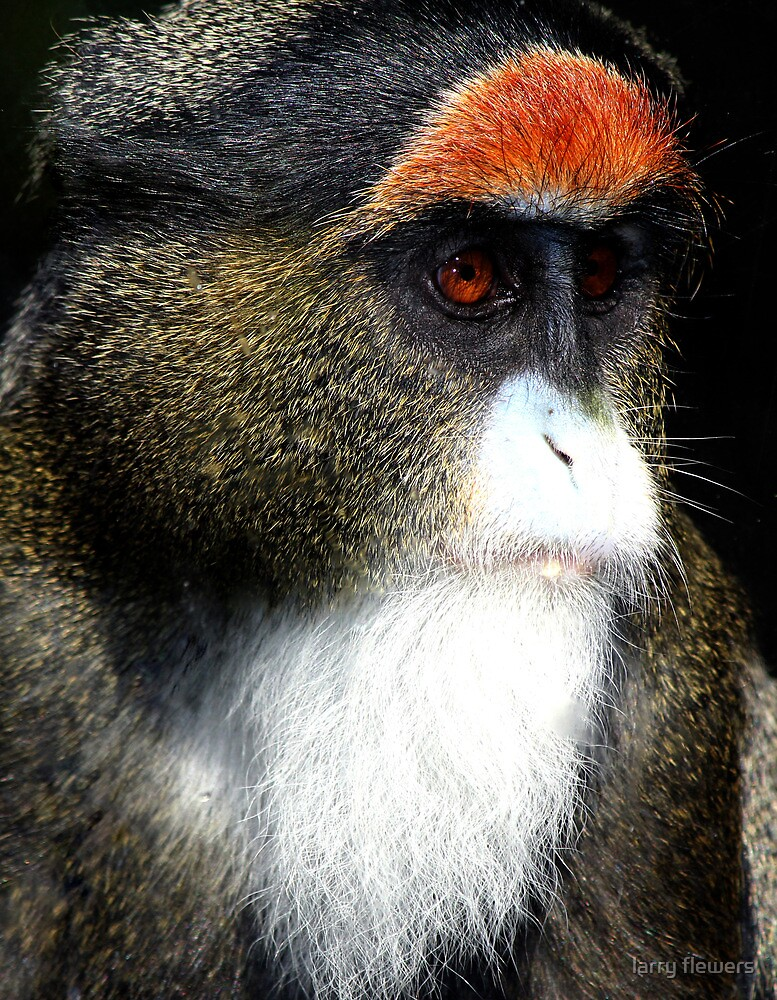 De Brazza's Monkey by larry flewers