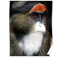 De Brazza's Monkey Poster