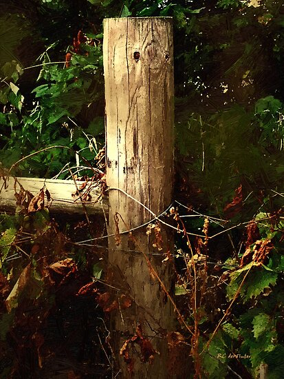 In the Woods by the River by RC deWinter