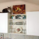 143 - MITCH ON TOP OF WALL-UNIT (D.E. 2012) by BLYTHPHOTO