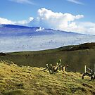 Kohala Landscape 2 by Ellen Cotton