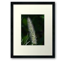Flower Of Grass - Flor De Hierba Framed Print