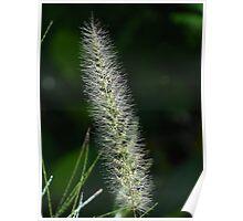 Flower Of Grass - Flor De Hierba Poster