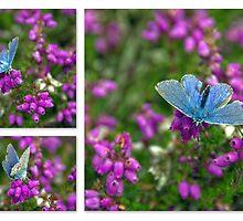 Pretty Blue by Kasia-D