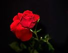 A single Rose can be my garden... by Kathy Weaver