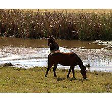 HORSE SWIM Photographic Print