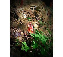 """""""Jester's Cap""""  Photographic Print"""