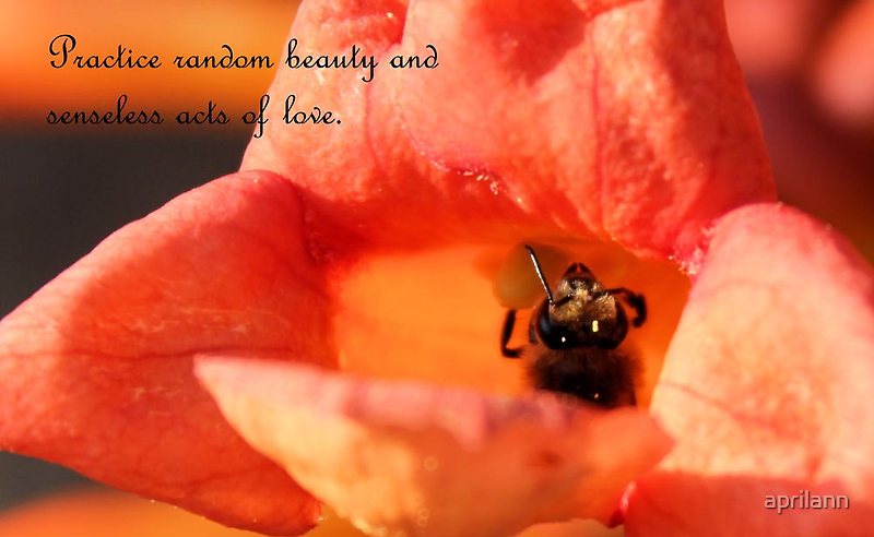 Practice Random Beauty and Senseless Acts of Love by aprilann