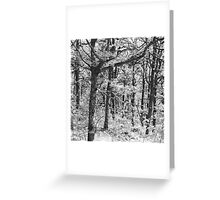 Nature 14 Greeting Card