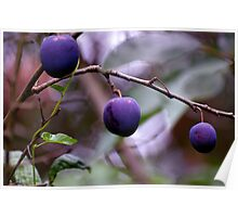 Plums Poster