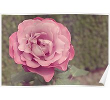 The Princess Rose Poster