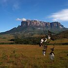 Mount Roraima by dalsan