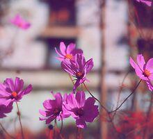 Pretty Pink Flowers by ieatstars