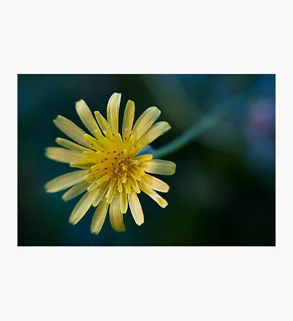 Dandelion Macro Lensbaby Photographic Print