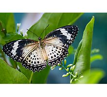 Butterfly Wing Span Photographic Print