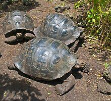 Giant Tortoise3 by bulljup