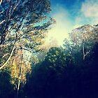 Sky High Mt Dandenong by Glorialynne