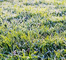 Icy grass by iPostnikov