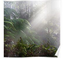 Black Range Forest Poster