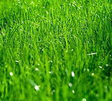 Grass by iPostnikov
