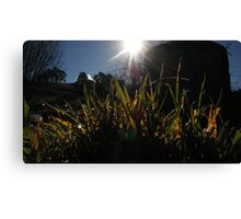 Tall grass. Canvas Print