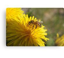 Flowers & Bee Metal Print