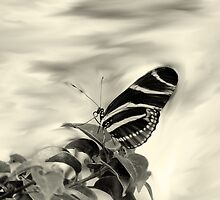 Zebra Wing in Sepia by Rosalie Scanlon