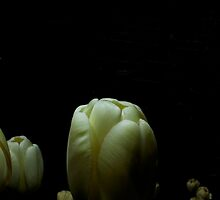 Moody Tulips by Ashley  Langtry