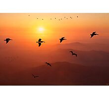 Pelican Migration Photographic Print