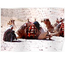 Bedouin and his camels; Israel. Poster