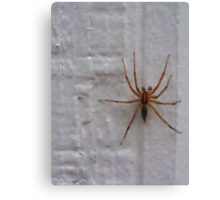 Siding Spider not so Sly Canvas Print