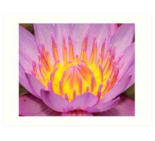 Bali Temple Water Lily 2 Art Print