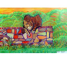 359 - CAT ON A DRY-STONE WALL - DAVE EDWARDS - COLOURED PENCILS - 2012 Photographic Print