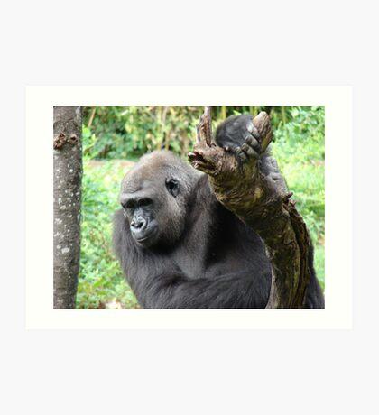 """Gorilla""  by Carter L. Shepard Art Print"